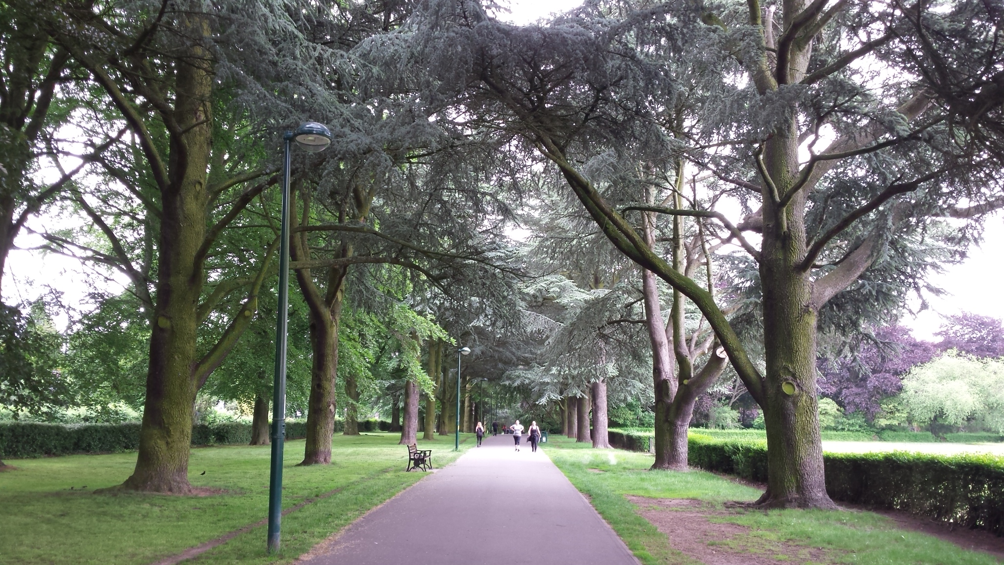 Solihull and Coventry Urban Forestry Strategy